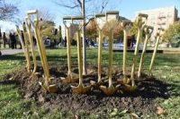 New York planted it's one Millionth tree