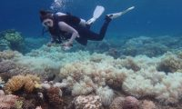 Coralreef_ccr