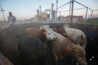 CCR Cutting Greenhouse Gases From Food Production Is Urgent, Scientists Say