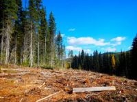 Clearcut swath from Pete Creek Road to Canadian Border
