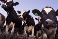 Factory_Farms_New_EPA_Emissions_Data_Should_Guide_Biden_on_Agriculture_and_Climate
