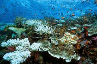 Corals_swap_in_heat_resistant_algae_to_better_cope_with_global_warming