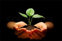 Regenerative_agriculture_The_movement_dedicated_to_unseating_intensive_industrial farming_by_claiming_it_has_comprehensive_sustainability_advantages