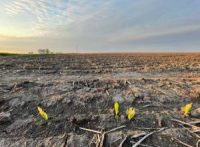 CCR Agriculture At Risk Due To Climate Change