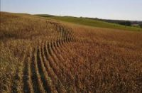 CCR Agriculture emits a 'forgotten greenhouse gas.' Scientists are looking for solutions in the soil