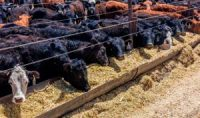CCR Air Pollution From Raising Livestock Accounts for Most of the 16,000 US Deaths Each Year Tied to Food Production, Study Finds