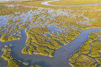Along_Southeast_Coast_Plan_to_Protect_1_Million_Acres_of_Salt_Marsh_Draws_Broad_Support
