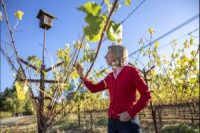 CCR Close to Home: For wineries, a carbon tax is pro-business