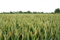 Consumers_would_pay_more_for_sustainably_produced_food