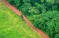 CCR From Beef to Chocolate, Illegal Deforestation Lurks Behind Your Favorite Everyday Foods