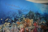 coral_reef_ccr