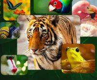 CCR Life in Colour with David Attenborough