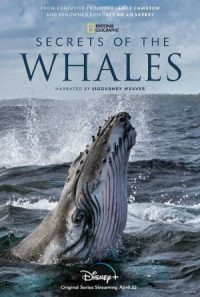 CCR Secrets of the Whales