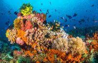 CCR Study finds protecting key ocean areas could boost total catch, fight climate change