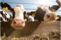CCR What are we doing about dairy emissions?