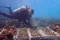 CORAL_REEFS_CCR