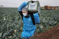 farm-workers-climate-change-california-
