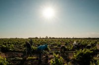 CCR Biden administration, workers grapple with health threats posed by climate change and heat
