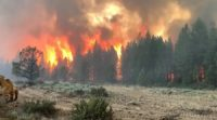 CCR Bootleg Fire rages in Oregon, burning 50 structures and threatening California's power supply