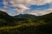 Ending_industrial_scale_logging_of_old_growth_on_Tongrass_National_Forest