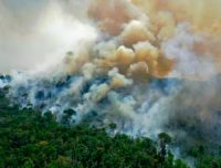 CCR Parts Of The Amazon Rainforest Are Now Releasing More Carbon Than They Absorb