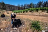CCR Scorched, Parched and Now Uninsurable: Climate Change Hits Wine Country