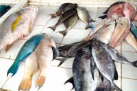 Sustainability_Certification_in_Aquaculture_Put_Your_Money_Where_Your_Mouth_Is