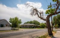 A dying tree does little to shade the intersection of 500 S. and 1250 W. in Poplar Grove on July 16, 2021.