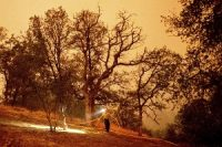 A firefighter lays hose around the Foothills Visitor Center while battling the KNP Complex in Sequoia National Park.