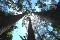 One_in_three_trees_face_extinction_in_wild_says_new_report