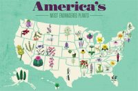 Take_a_look_at_some_of_Americas_endangered_plants_by_state
