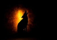 the_wolf_ccr