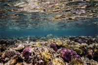 Climate_change_killed_14_-of_the_worlds_coral_reefs_in_a_decade_study_finds
